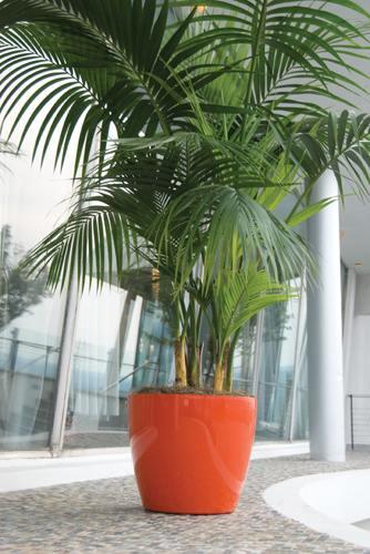 plant interiorscaping