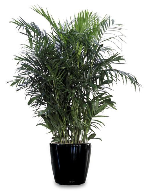 office plants utah