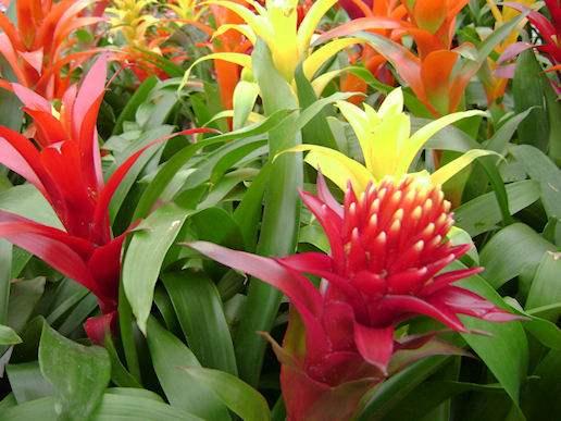 indoor blooming plants Utah