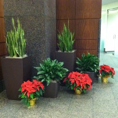 indoor holiday flowers