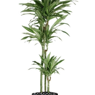 Indoor plant landscaping options