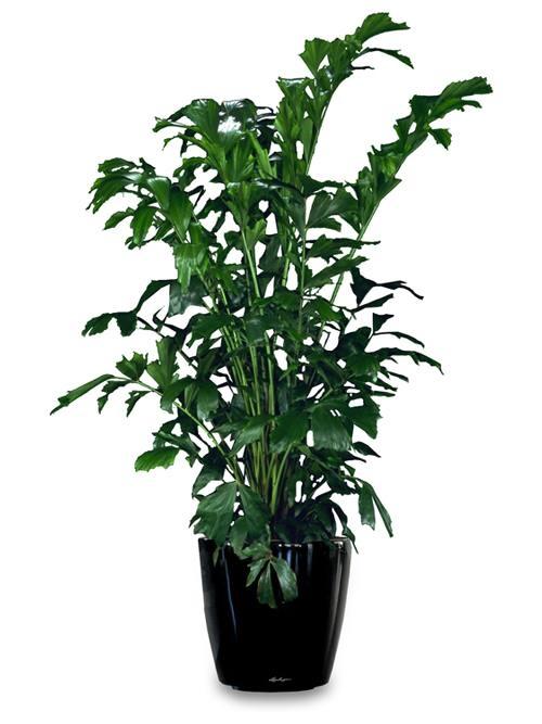 Green indoor plants Utah