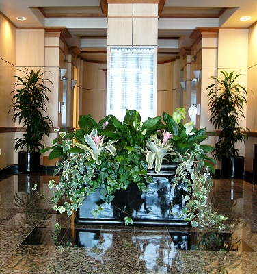 Office Plants And Interiorscaping Improve Productivity