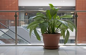 Live Office Plants Surpass Artificial Plants