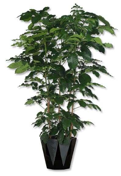 Indoor Plant Options Utah