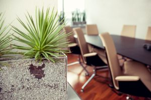 Office Plant Mistakes