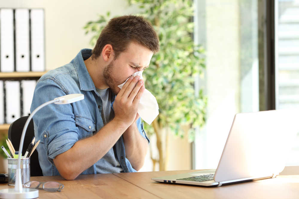 Office Plants for Allergies