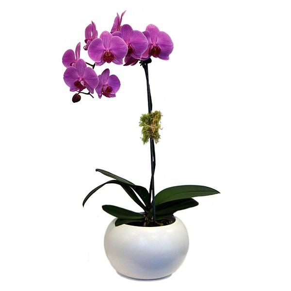 Indoor Flower Arrangements