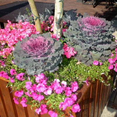 Outdoor Office Planters Utah