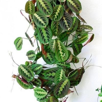 Interior office plants