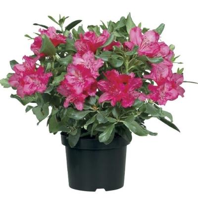 office flower arrangements