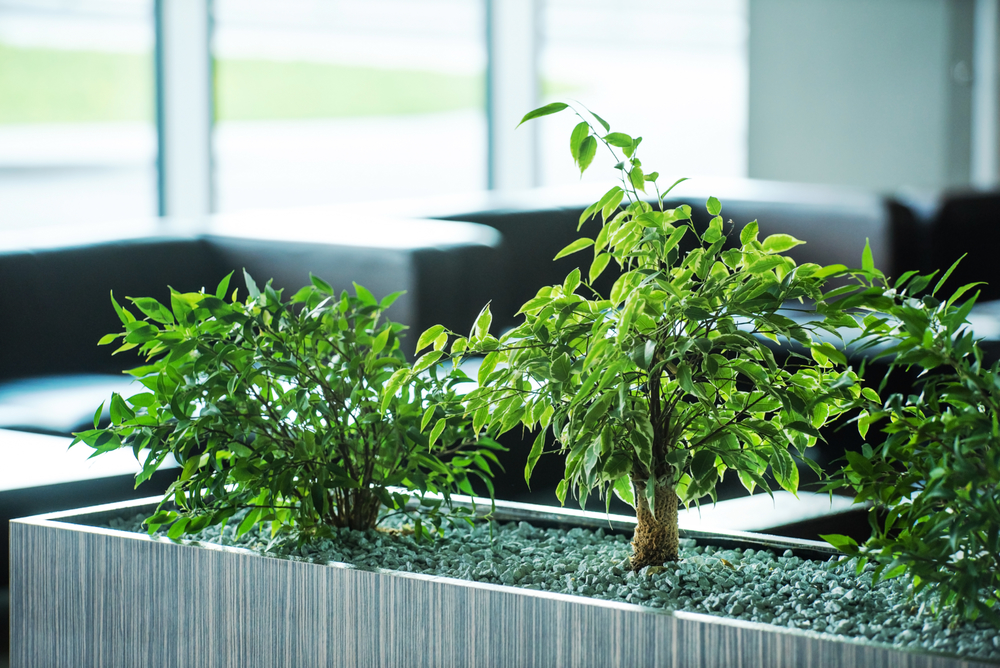 office plant services Utah