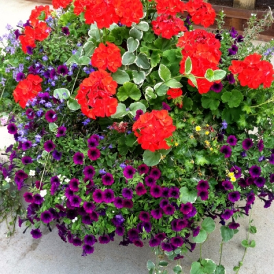 Outdoor Office Planters