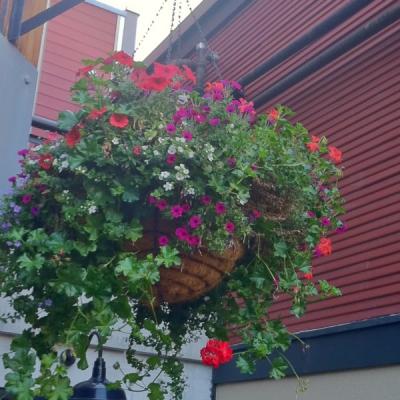 Interior basket planters
