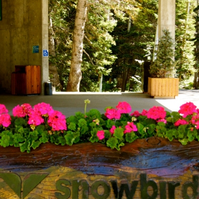 Outdoor Office Planters Utah